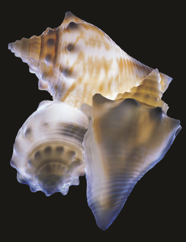 Shells • Chris Adyniec
